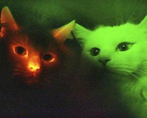 cats_0