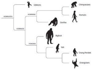 Cryptozoologicon-hominid-cladogram-350-px-tiny-Dec-2013-Darren-Naish-Tetrapod-Zoology