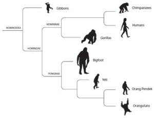 Cryptozoologicon-hominid-cladogram-350-px-tiny-Dec-2013-Darren-Naish-Tetrapod-Zoology