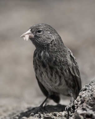 Vamp Birds