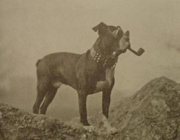 Addison, a peculiar dog